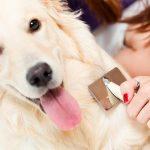 Как ухаживать за шерстью собаки?
