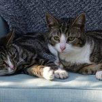 Заболевания нижних мочевых путей у кошек