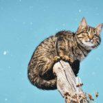 Почечная недостаточность у кошек. Что делать?