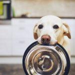Переедание у собаки. Что делать, если у собаки чрезмерный аппетит?
